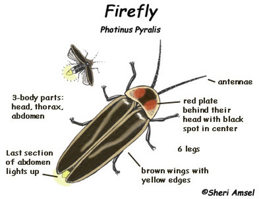 Firefly is the name of two fictional supervillains appearing in American comic books published by DC Comics with both being enemies of Batman